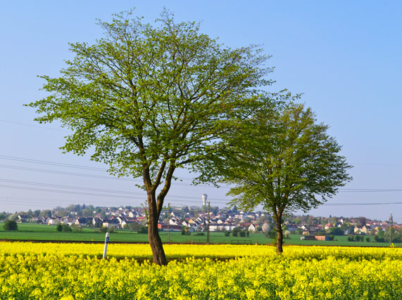 Stadt Borken ( Hessen)